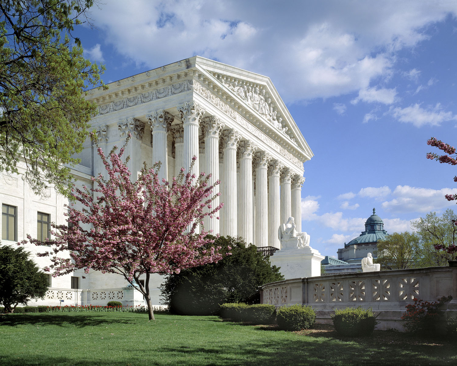 The United States Supreme Court with a cherry blossom tree in the foreground